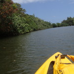 Last Day on Kauai – Kayaking the Wailua River