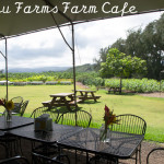 Coffee Shops and Cafes: Kahuku Farms Farm Cafe