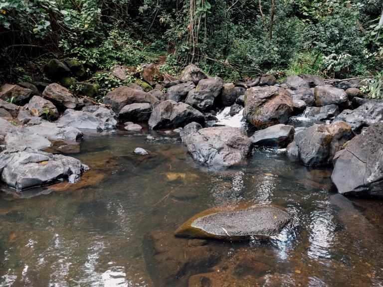 jackass ginger pool trail - judd memorial trail oahu (8 of 11)