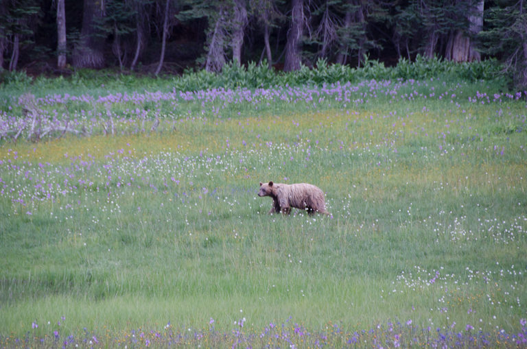 A lesson in living in the moment (or: that time I saw a bear in Yosemite)